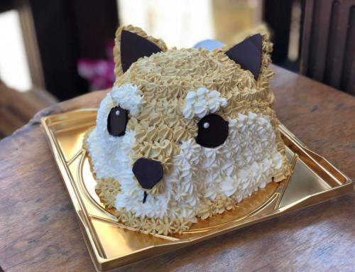 オーダーケーキのご紹介と放映のお知らせです